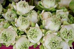 Lotus flower for praying buddha Royalty Free Stock Image