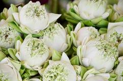 Lotus flower for praying buddha Stock Images