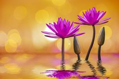 The lotus flower represents the symbol of Buddhism and can be used to worship God stock illustration