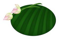 Lotus Flower rose sur la feuille verte de banane Image libre de droits