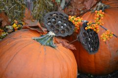 Lotus Flower Seed Pods with Pumpkins Stock Image
