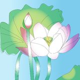 Lotus flower sketch art and nature pink soft Royalty Free Stock Photo