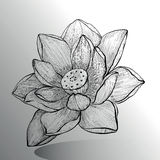 Lotus Flower skissar royaltyfri illustrationer