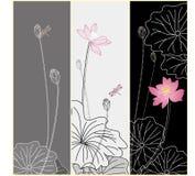Lotus flower texture Royalty Free Stock Image