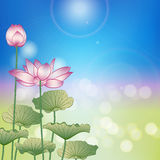 Lotus flower under the sun Stock Photography