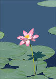 Lotus flower vector Royalty Free Stock Images