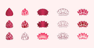Lotus Flower Vectors Photo stock