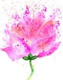 Lotus Flower Watercolor Immagini Stock Libere da Diritti