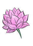 Lotus flower watercolor hand-drawn painting. It is watercolor vertical hand-drown painting of pink lotus on a white background with solid pink paint and black Stock Photo