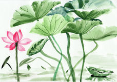 Lotus flower watercolor painting Stock Images