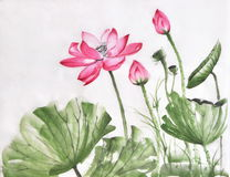 Lotus flower watercolor painting Stock Photos