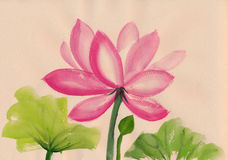 Lotus flower watercolor painting Royalty Free Stock Images