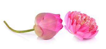 Lotus flower on white background Stock Photo