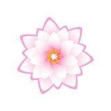Lotus flower on white background Stock Photo