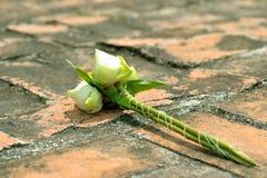 Lotus flower for worship Royalty Free Stock Image