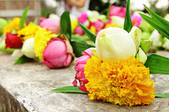 Lotus flower for worship. In Thailand temple Royalty Free Stock Image