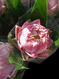 Lotus flower wrapped in clear plastic for worship Royalty Free Stock Photo