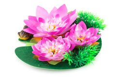 Lotus Flowers Images libres de droits