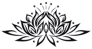 Free Lotus, Flowers Stock Photos - 33650103