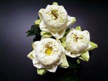 Lotus Flowers Royalty-vrije Stock Afbeelding