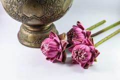 Lotus Flowers Stockbild