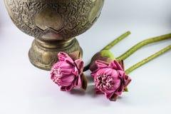 Lotus Flowers Stockfotos