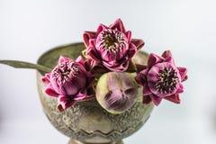 Lotus Flowers Lizenzfreie Stockbilder