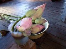 Lotus Flowers Immagini Stock