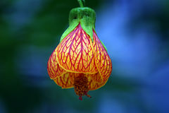 Lanterns flowers Royalty Free Stock Images