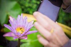 Lotus flowers background Stock Image