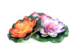 Lotus flowers Royalty Free Stock Photo