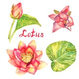 Lotus flowers, buds and leaves collection, isolated on white. Hand painted watercolor illustration with handwritten inscription Royalty Free Stock Photo
