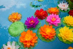Lotus flowers floating in the pond stock photos