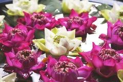 Lotus Flowers Floating On The-Vijver Stock Foto's