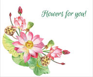 Lotus Flowers Hand gezeichnete Abbildung Stockfotos
