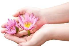 Lotus flowers on hand. Isolate white Stock Photo