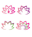 Lotus flowers. Illustration with beautiful lotus flowers Stock Image