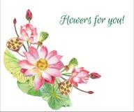 Lotus Flowers Illustration tirée par la main Photos stock