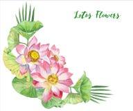 Lotus Flowers Illustration tirée par la main Photo stock