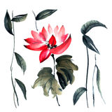Lotus. Flowers illustration.. Stock Photography