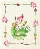 Lotus Flowers Ilustração desenhada mão Fotografia de Stock Royalty Free