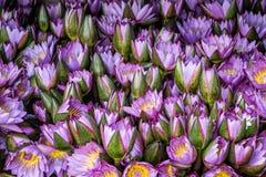 Lotus flowers in market for worship. Fresh lotus flowers at market for worship stock image