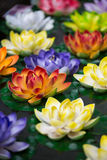 Lotus-flowers in a pond. In Lhasa in China royalty free stock images