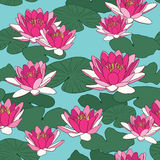 Lotus flowers in seamless pattern Stock Images