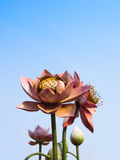 Lotus Flowers Statue. In blue sky Royalty Free Stock Photography