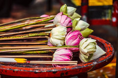 Lotus flowers used as offering in Buddhist temple Royalty Free Stock Photography
