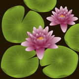 Lotus flowers. Vector illustration Royalty Free Stock Photo