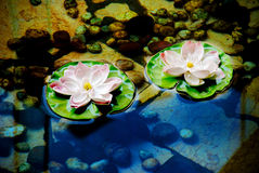 Lotus flowers on water Stock Photo
