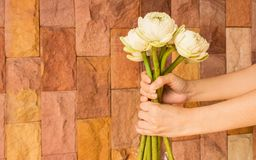 Lotus flowers - White lotus flowers in woman hands. With modern stone wall background. White color symbolizes being pure in body, mind and spirit. It symbolizes Stock Photography