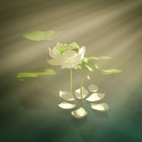 Lotus in fog. 3d white lotus in the mist Royalty Free Stock Photos
